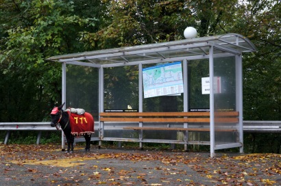 Our guide asked if we didn't have donkeys in the U.S. Yes, but not ones that dress up and wait at the bus stop!